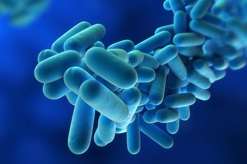 What is legionella?